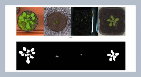 Automatic monitoring of the growth of plants using deep learning-based leaf segmentation