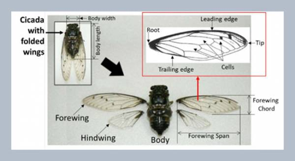 A bioinspired MAV with nanocomposite wings and flexure joints: design and structural dynamic analysis